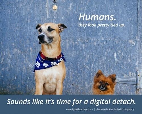Application Digital Detach